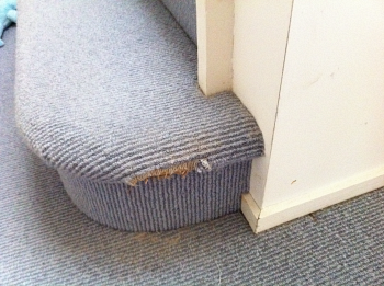 How to stop dogs chewing carpets and furniture