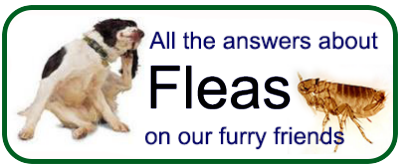 Fleas on our furry friends